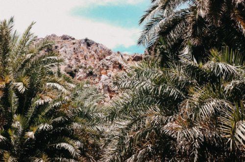 Eine kleine Lichtung im Palmenwald von Preveli, Kreta