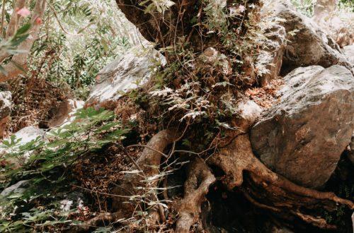 Der kleine Wanderpfad in der Schlucht von Richtis auf Kreta