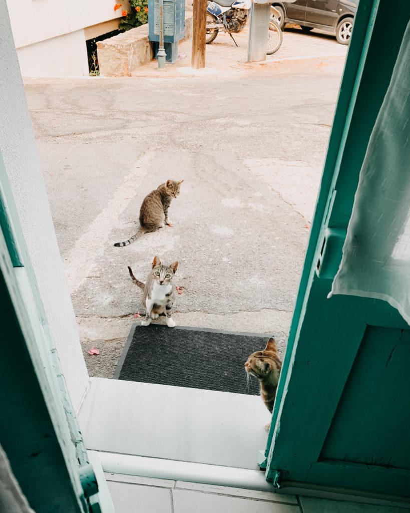 Straßenkatzen warten vor Türkisen Haustür