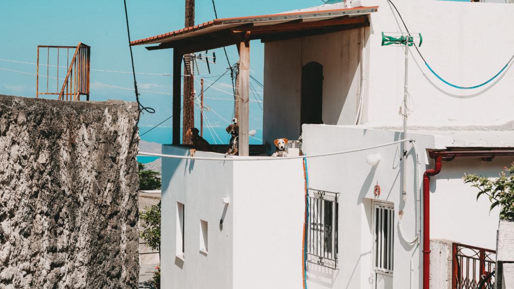 3 Hunde die von einem Balkon runterschauen