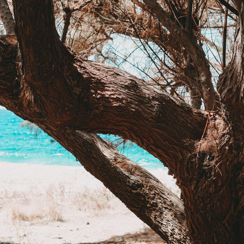 Blick durch die Äste eines Baumes an einem Strand von Kreta