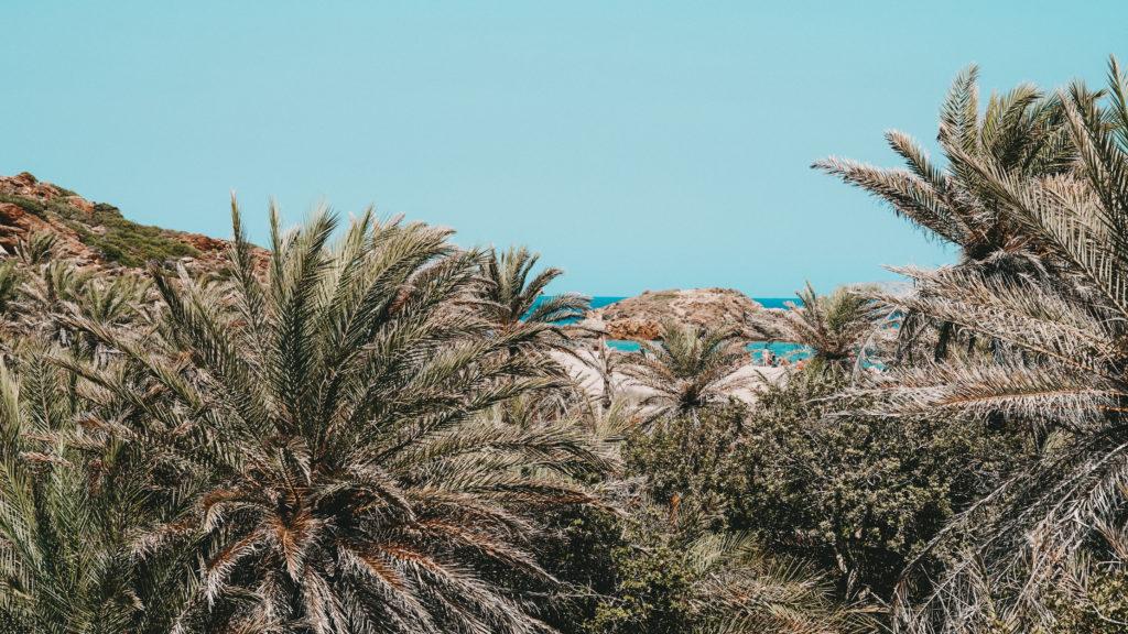 Die Palmen von Vai, Kreta