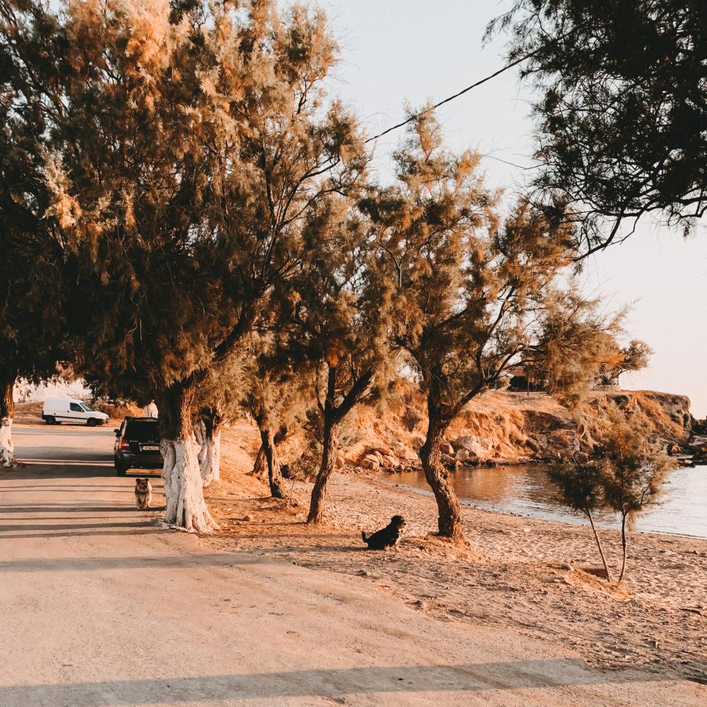 Hunde genießen den Sonnenaufgang am Strand von Agii Apostoli