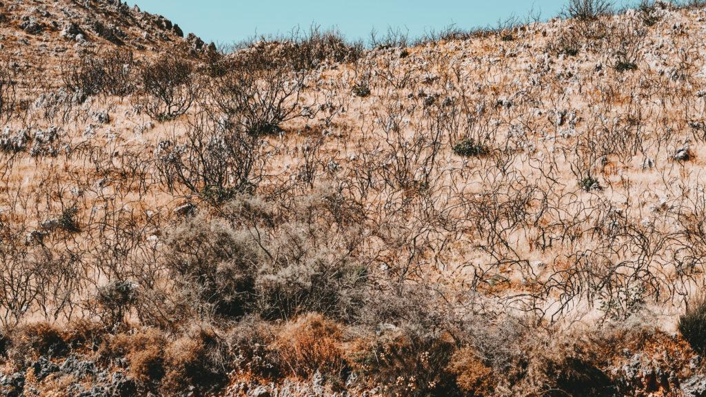 Die Überreste verbrannter Büsche auf Kreta