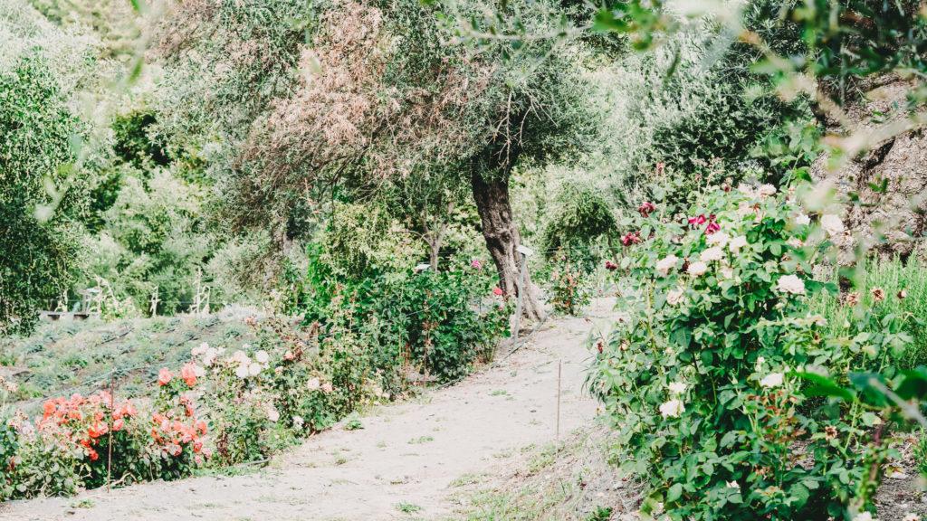 ein Trampelpfad durch einen grünen Garten voller Käuterbüsche